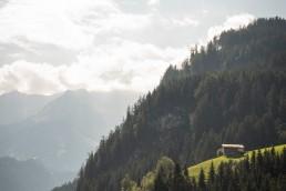 österreich-wälder-bäume